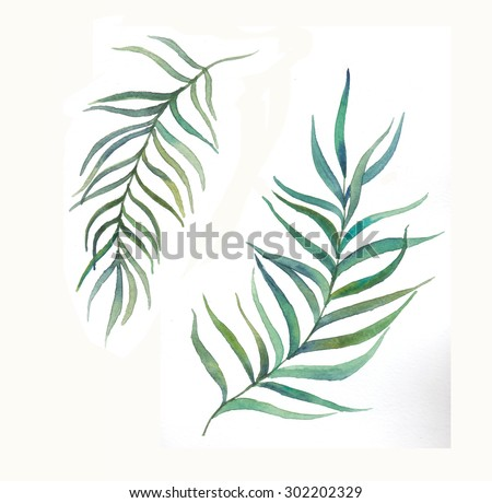 Watercolor palm tree leaves set. Isolated hand drawn botanical elements. Floral illustration - stock photo