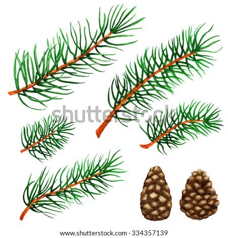 Watercolor pine tree branches, cones set isolated on white background. Hand painting on paper - stock photo