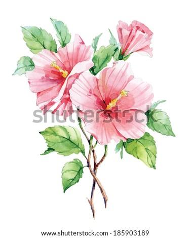 Watercolor pink hibiscus - stock photo