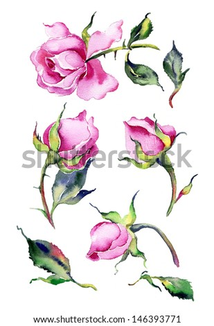 Watercolor pink roses - stock photo