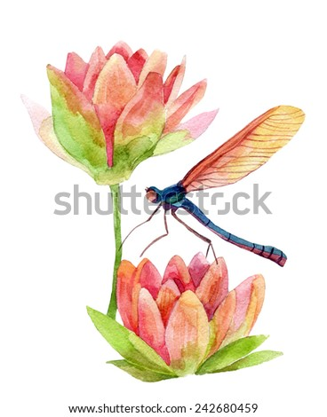Watercolor pink water lily flower with dragonfly. Hand painted illustration  - stock photo