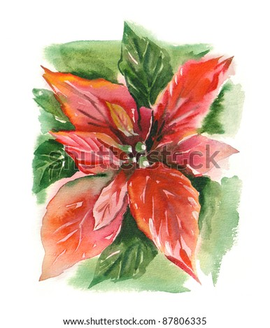 Watercolor -Poinsettia (Bethlehem Star)- - stock photo
