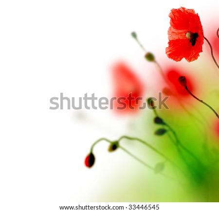 Watercolor Poppies - stock photo