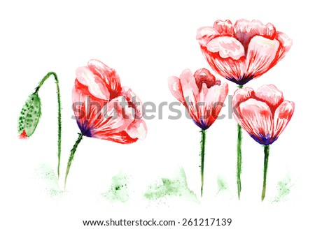 Watercolor poppies illustration | Bright aquarelle painting with beautiful red flowers - stock photo