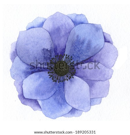 Watercolor realistic anemone. Hand drawn illustration. - stock photo