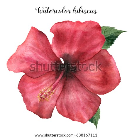 hibiscus stock images, royaltyfree images  vectors  shutterstock, Beautiful flower