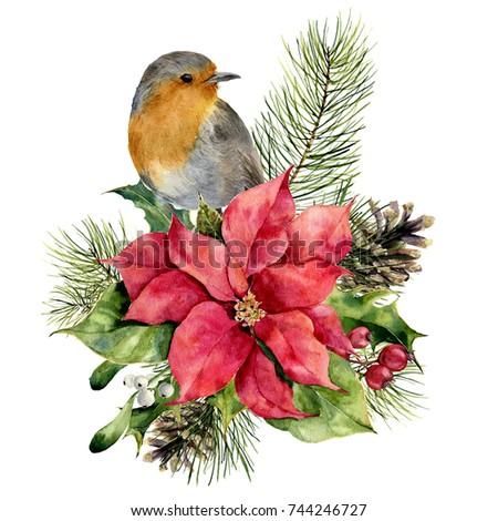 Watercolor Robin Poinsettia Christmas Floral Decor Stock