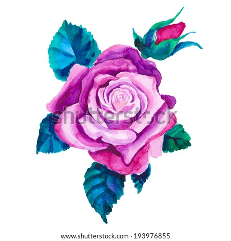 Watercolor rose flower. Hand drawn vintage illustration. Raster version.  - stock photo