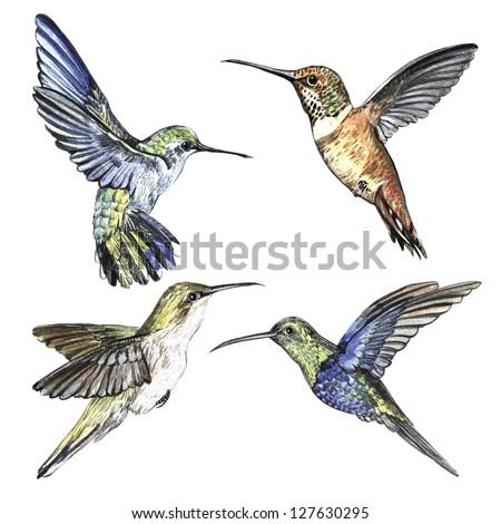 watercolor set hummingbirds - stock photo