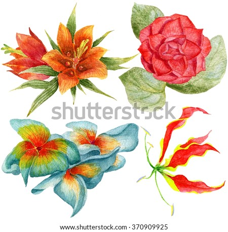 Watercolor set. Set of traditional and tropical flowers. Set of tropical flowers. - stock photo