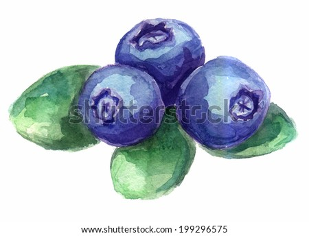 watercolor sketch of blueberries - stock photo