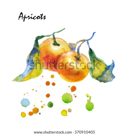 Watercolor sprig with  apricots, leaves. Food, logo, template. Element for pattern, background, design menus, postcards, brochures. Isolated fruit. Vegetarian food. Sweet light dessert. Healthy food. - stock photo