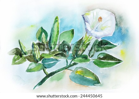 Watercolor still life with beautiful white flower
