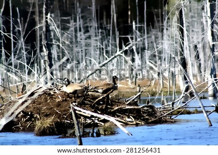 Watercolor style background digital illustration of geese resting on a beaver dam in a wetland - stock photo