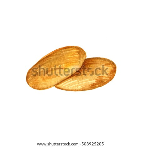 watercolor sweet cookies, golden biscuits isolated at white background, hand drawn illustration