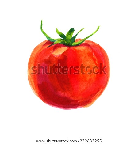 Watercolor tomato isolated on white background  - stock photo