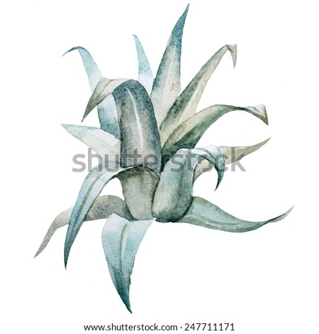 watercolor, tropical, drawing, palm leaves, bush - stock photo
