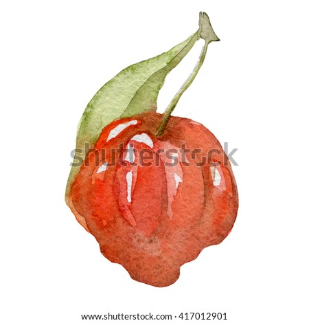 watercolor Tropical fruit also called Pitanga hand drawn - stock photo