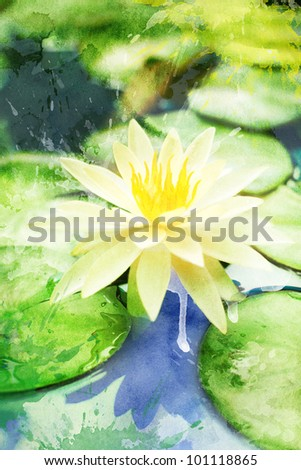 Watercolor white water lily on a pond, for backgrounds or textures - stock photo