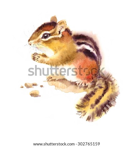 Watercolor Wild Animal Rodent Chipmunk Eating Nuts Hand Drawn Illustration isolated on white background - stock photo