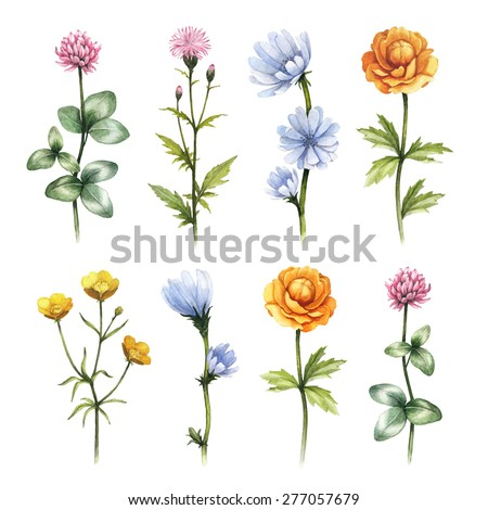 Watercolor wild flowers illustrations - stock photo