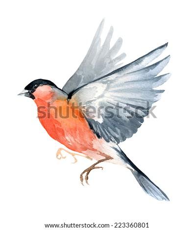 Watercolor wildlife natural winter Christmas robin bird - stock photo