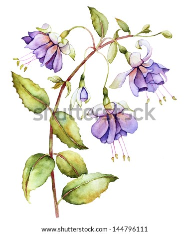 Watercolor with fuchsia flower - stock photo