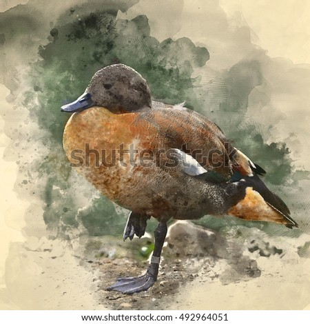 Watercolour painting image of Beautiful portrait of South African Shelduck in pond landscape