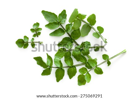 Watercress isolated on a white background.  Overhead view. - stock photo