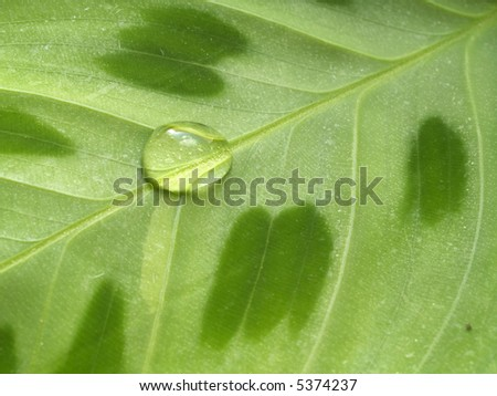 Waterdrop on a green leaf - stock photo