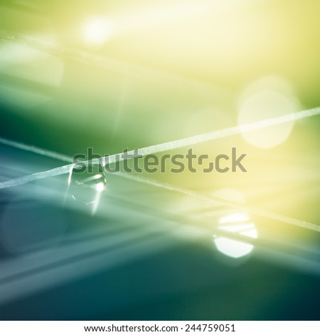 waterdrop on a thread in lovely morning light in spring - stock photo