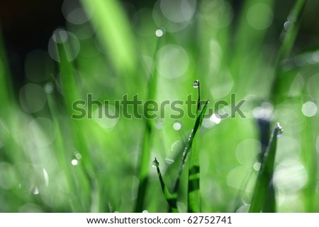 Waterdrop on blade of grass with defocused lush green meadow background - stock photo