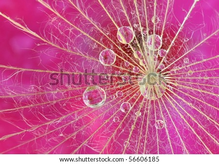 Waterdrop reflection on dandelion seed - extreme macro - stock photo