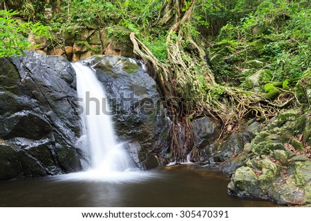 waterfall and tree root