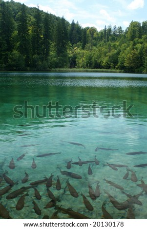 Waterfall in the Plitvice National Park UNESCO World Heritage, Croatia. Trout swim the loch. - stock photo