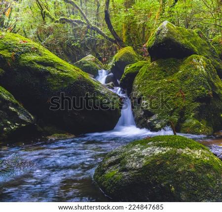 Waterfall in Yakushima, Japan - stock photo