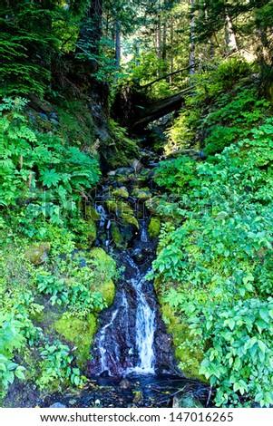 Waterfall nearby of Crescent Lake, WA, Olympic NP - stock photo
