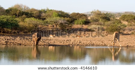 Waterhole scenic - stock photo