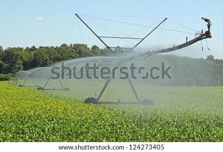 Watering a farm field of corn plants - stock photo
