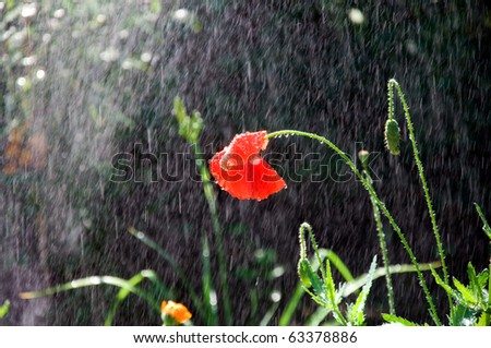 watering a flower close up - stock photo