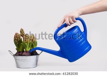Watering a potted flower