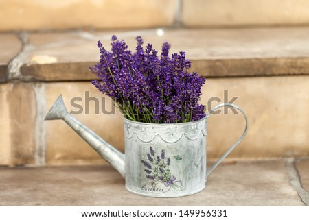 Watering Can and Lavender isolated on white - stock photo