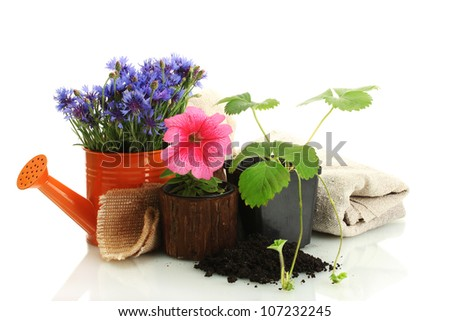watering can and plants in flowerpot isolated on white