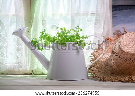 Watering can full of fresh herbs in the kitchen - stock photo