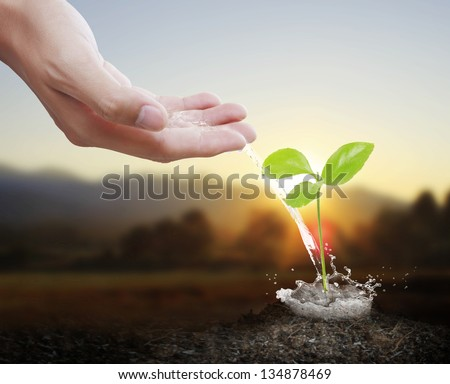 watering can pouring water green plant - stock photo