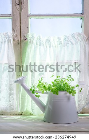 Watering can standing in a sunny window with herbs - stock photo
