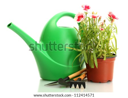 watering can, tools and plant in flowerpot isolated on white - stock photo