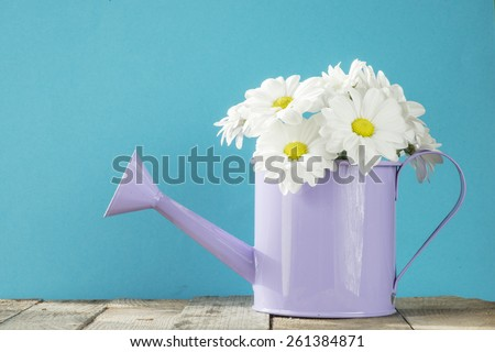 Watering can with camomiles. Watering can with camomiles flowers - stock photo