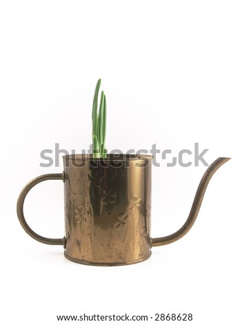 Watering Can with Sprouting Bulb - stock photo