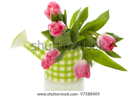 Watering can with tulips on a white background - stock photo
